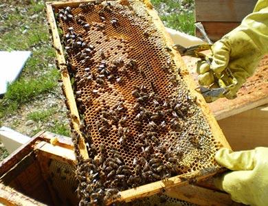 Venta de materiales de colmenas de abeja: marcos, cámaras de cría, alzas, núcleos, cera, tapas, entretapa, cera, reynas,etc