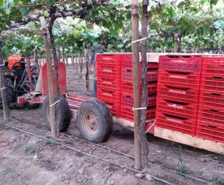 Transporte de pallets con fruta