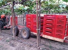 Transporte de pallets con fruta.